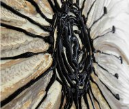 Specchio Petunia oro Pintdecor